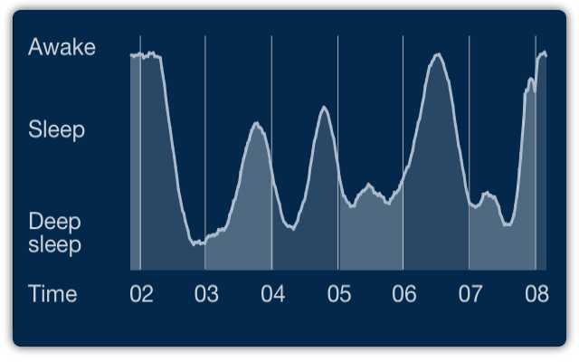 sleep cycle REM