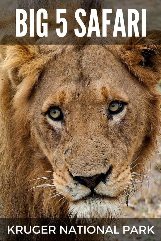 Big 5 safari in Kruger National Park