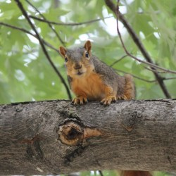 squirrel-387759_1920
