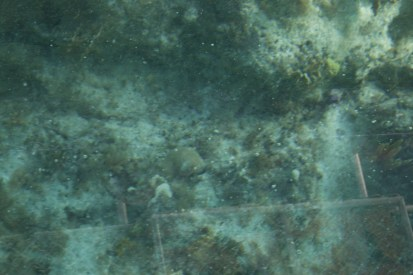 170120-cruise-cococay-031