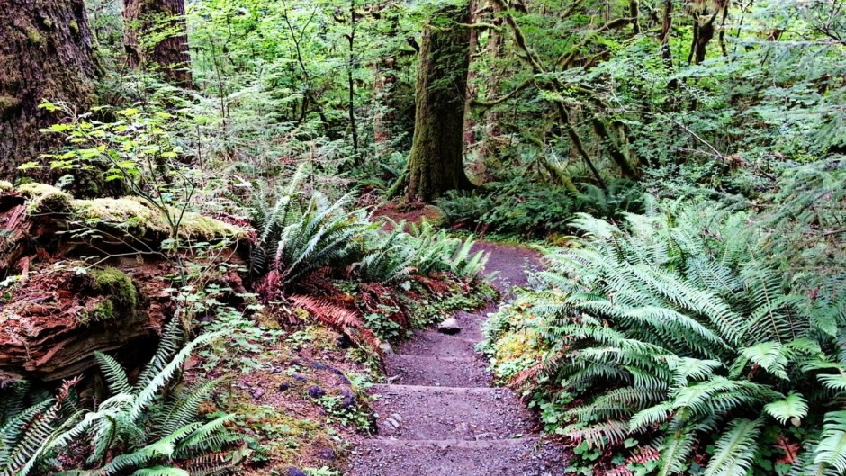 Hoh Rainforest Trail - Olympic National Park