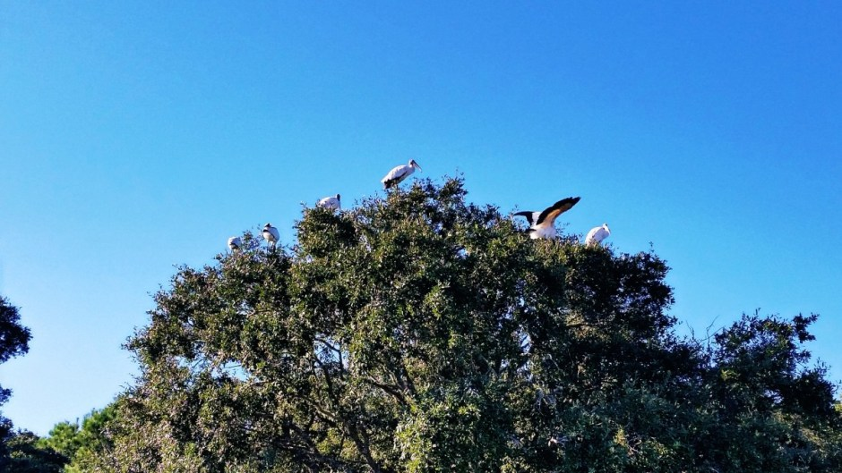 Birds at Huntington Beach State Park