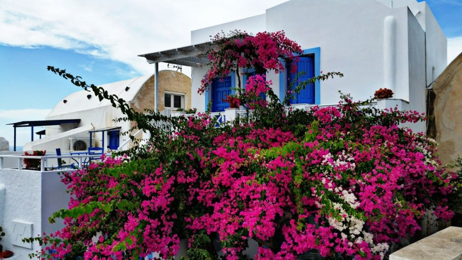Flowers of Santorini