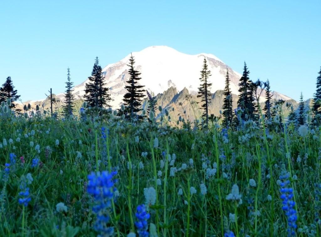 Mt Rainier - National Park Service