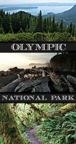 Olympic National Park in Washington should be on your bucket list!