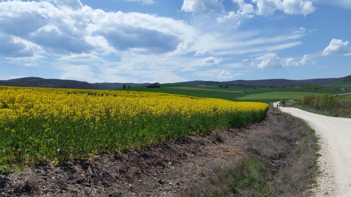 Walking the Camino Frances: Redilla del Camino to Ages