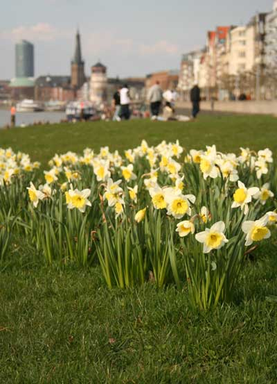 Frühling-in-Düsseldorf.jpg