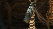 marty-the-zebra-chris-rock-in-madagascar
