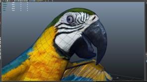 parrot_05