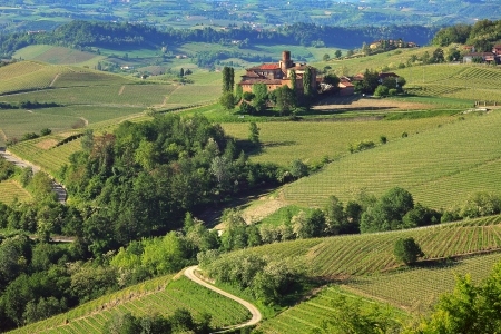 25337864 - green hills and vineyards of langhe in the morning at spring in piedmont, italy