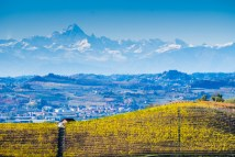 70519511 - langhe vineyards in autumn