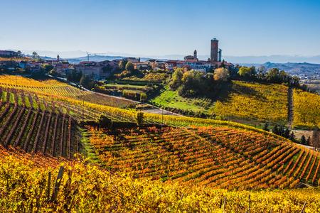70519509 - langhe vineyards in autumn