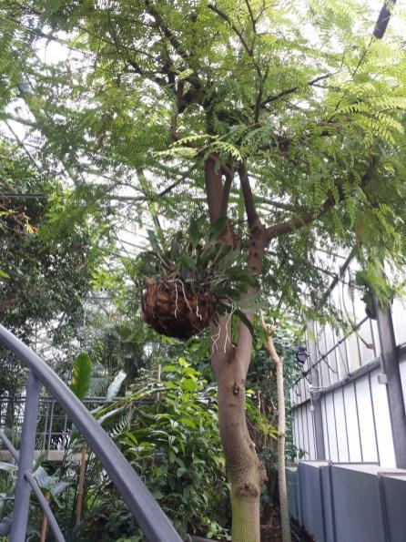 Piante tropicali: appese nascono