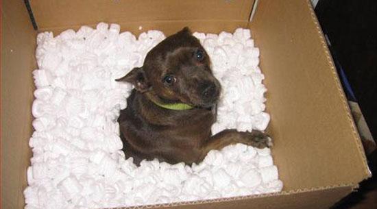 Turbolenze in volo e cuccioli per posta