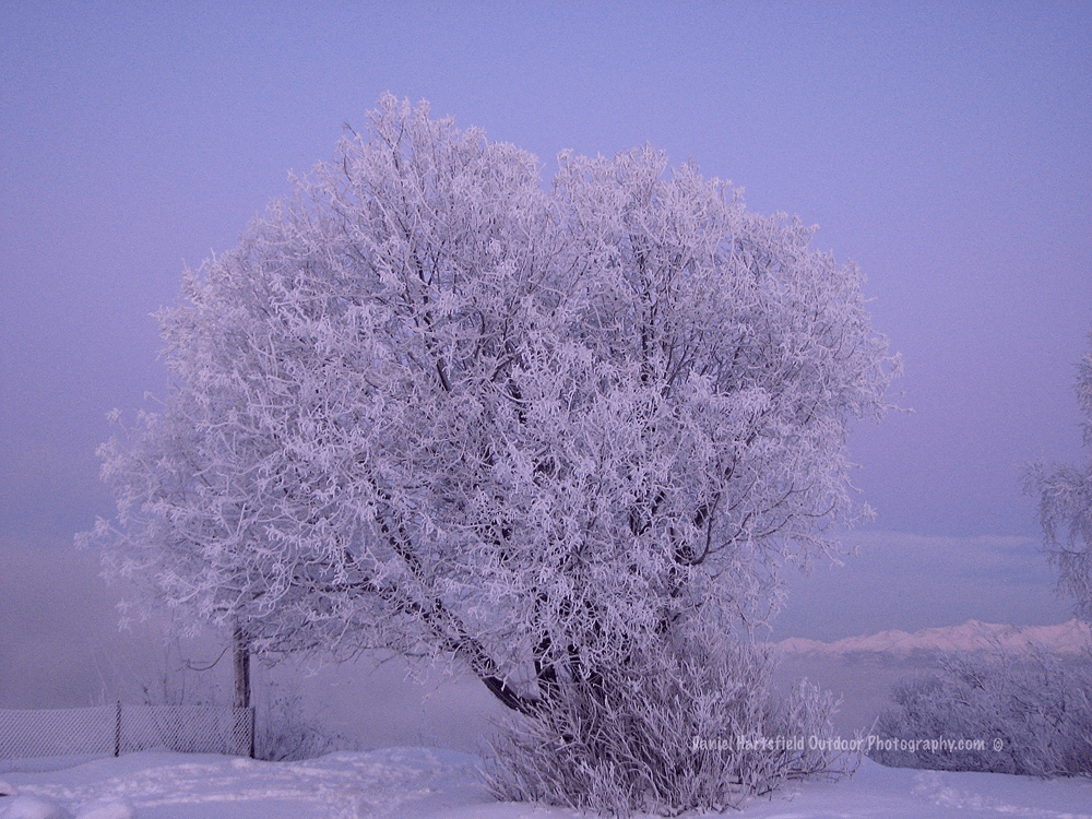 1-12 EARTHQUAKE PARK FROST_sm