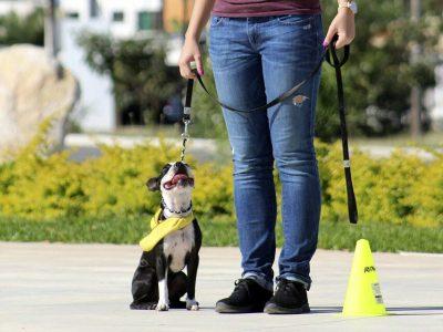 dog, dog training, entrenamiento canino