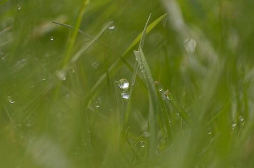 groene grassprietjes met druppel