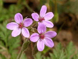 florais para tratamento de TOC