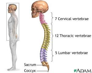 FITNESS: Is lack of spinal mobility keeping you from lower
