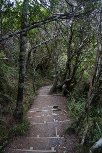Dense Forest at Tongariro National Park