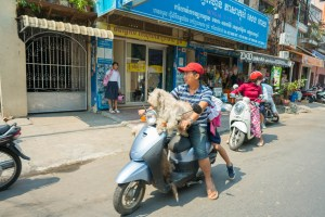 Two Dogs on a Motorbike in Phnom Penh