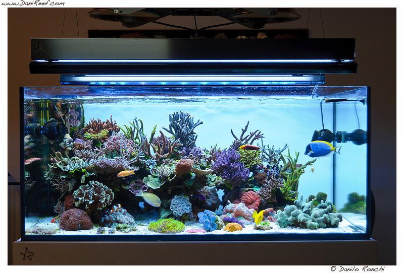Plafoniere Hqi Per Acquario Marino : Led contro hqi danireef portale dedicato all acquario marino e