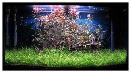 marco_donati_aquarist_05