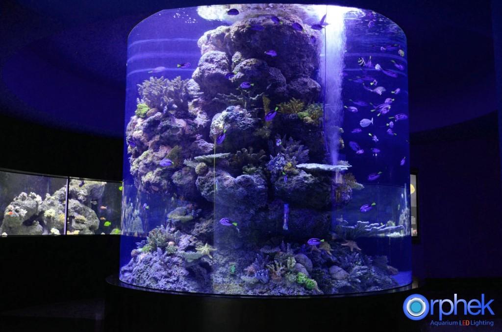 Plafoniere Led Per Acquari Marini Cinesi : I acquari pubblici più belli del mondo ed in italia
