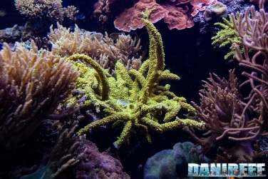 2015_12 Madagascar Reef Aquarium at Zoo Zurich33