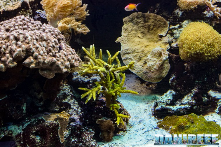 2015_12 Madagascar Reef Aquarium at Zoo Zurich46