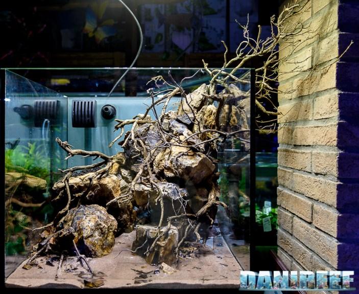 201704 acquario club, aquascaping, itau 26 Copyright by DaniReef