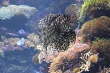 Acquario marino con coralli molli e pesci di grandi dimensioni
