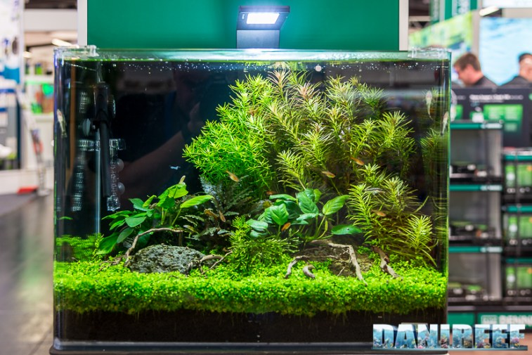 201805 aquascaping, dennerle, interzoo, layout 19 Copyright by DaniReef