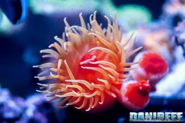 2018_09_Coralli, macna, sea dwelling creatures_103