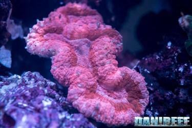 2018_09_Coralli, macna, sea dwelling creatures_106