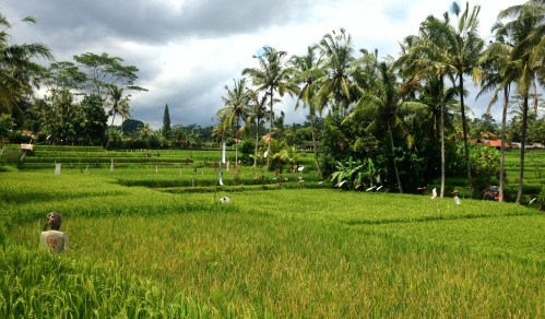 Cultural Landscape of Bali Province in Indonesia