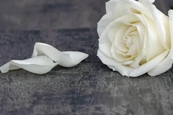 Danksagung Trauer  Danksagungstexte als Beispel