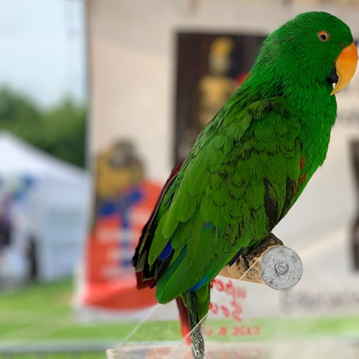 hold live birds at the dunwoody art festival