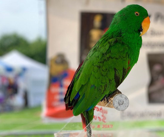 hold live birds at the dunwoody art festival