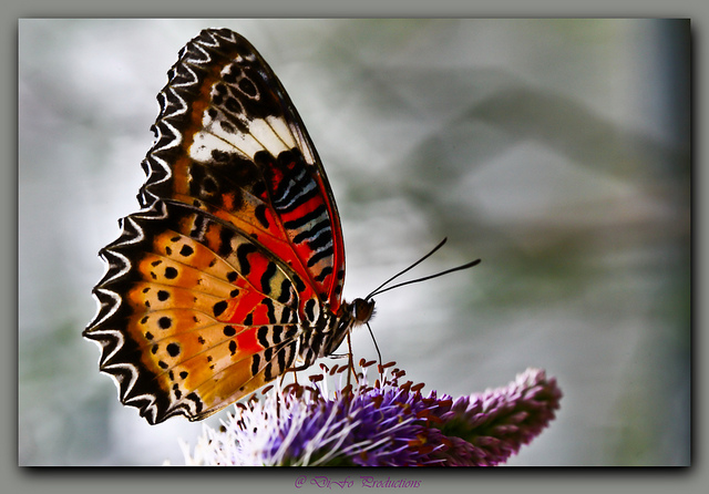 The Butterfly Effect of Entrepreneurship