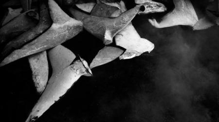 Slachtingen van haaien