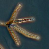 Exserohilum rostratum, the killing fungus