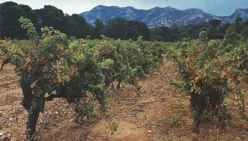The vineyards at Mas de la Dame in Les Baux de Provence