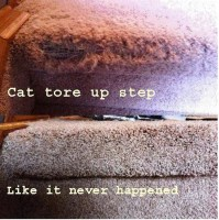 Repairs Archives - Dan's Carpet Cleaning Services