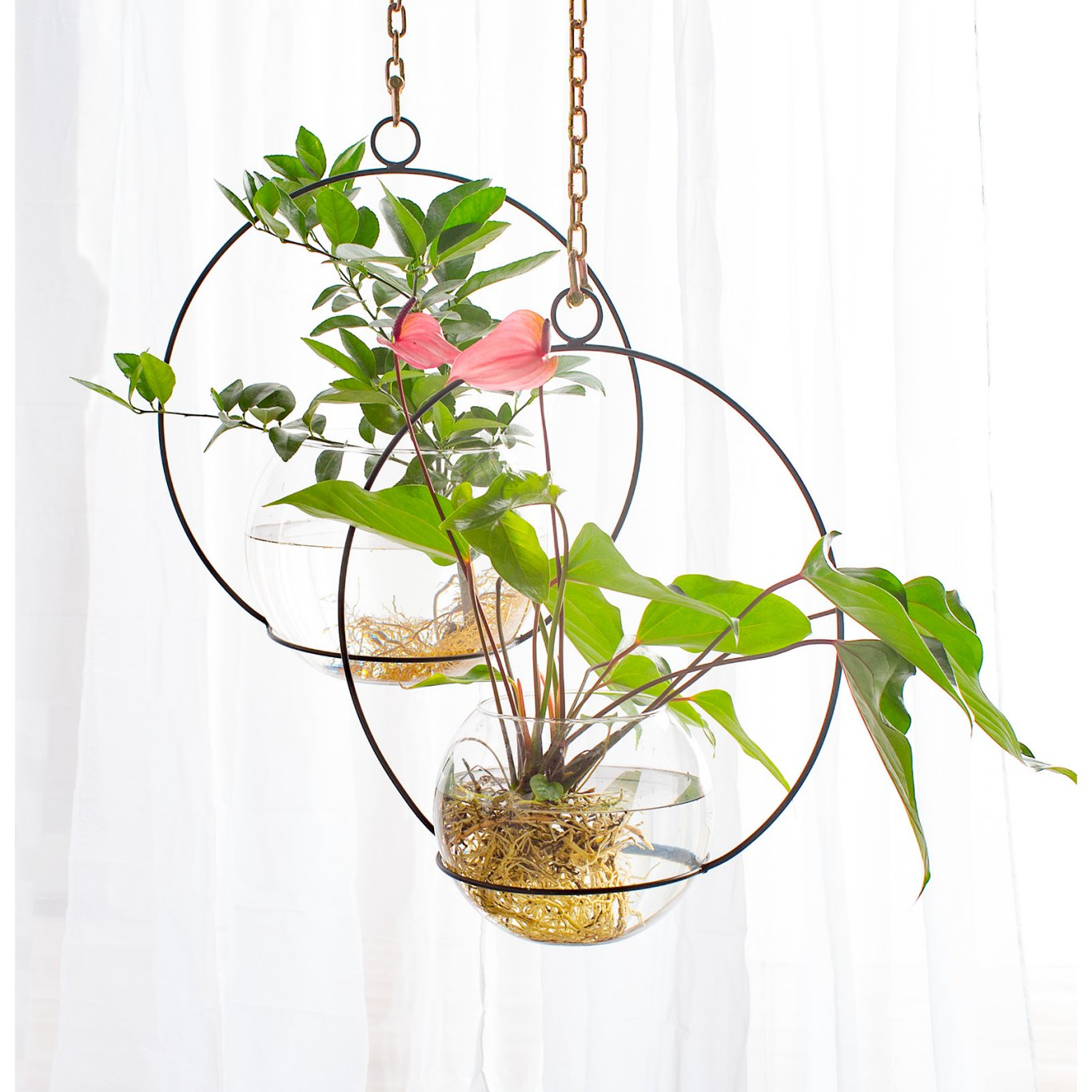 Where to Buy Hanging Hoop Planters