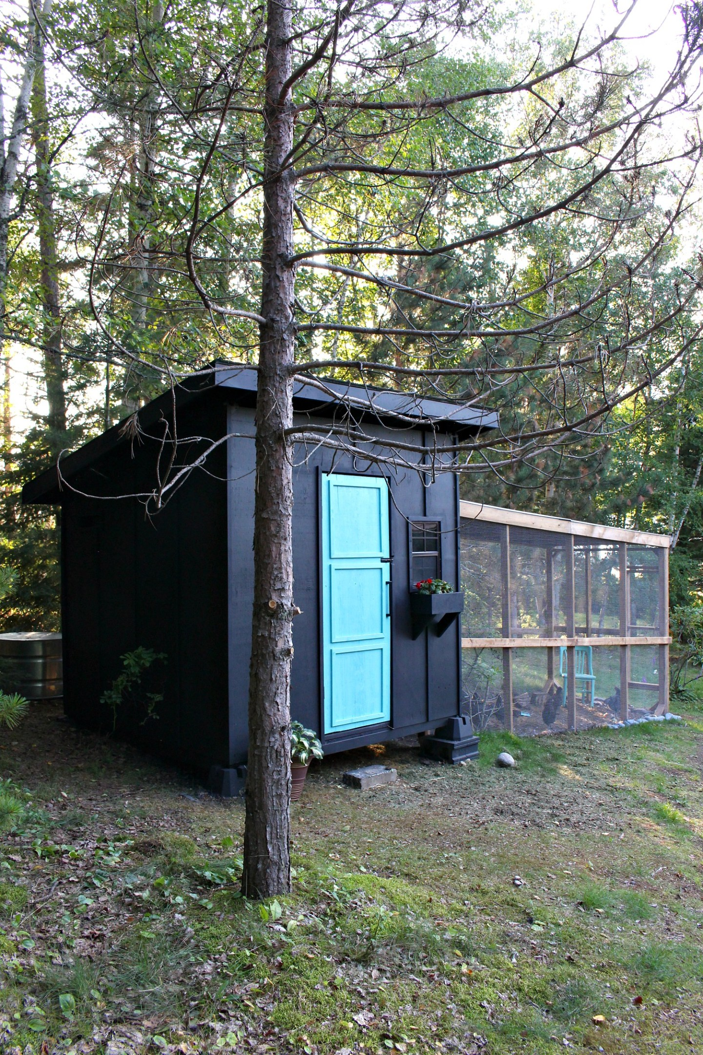 Modern Black Chicken Coop Design with Covered Run and Aqua Door