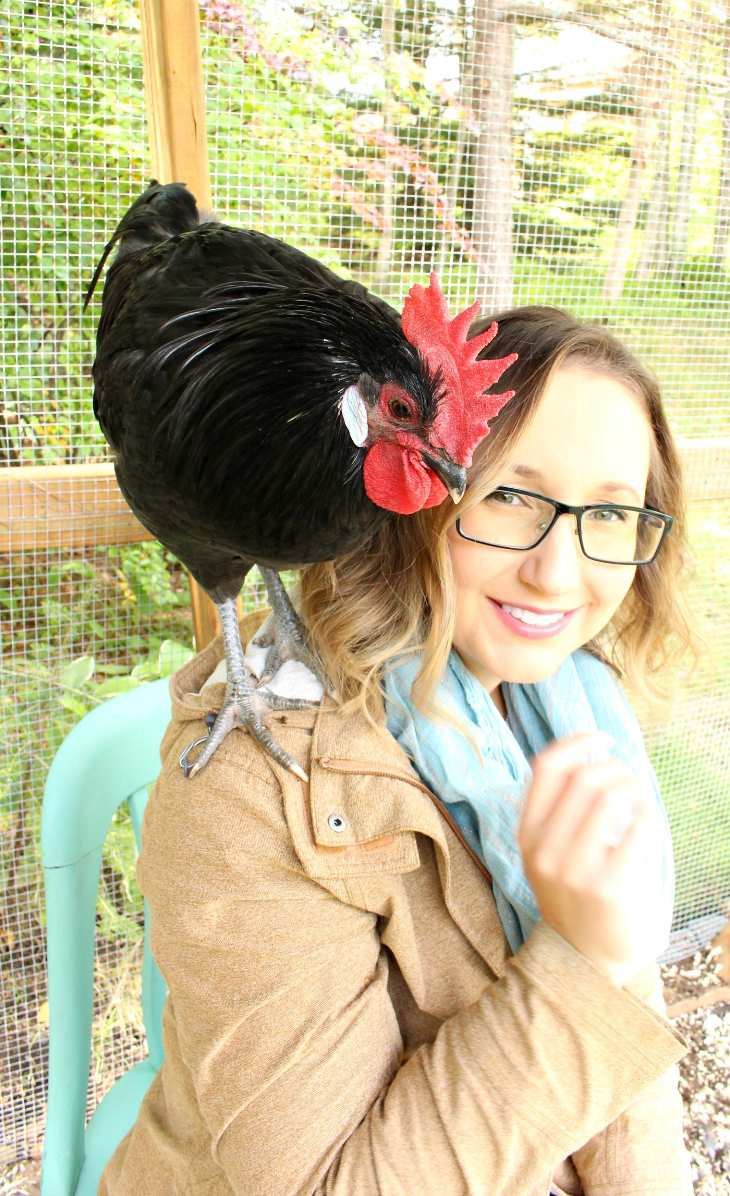 Tame and Gentle Rooster