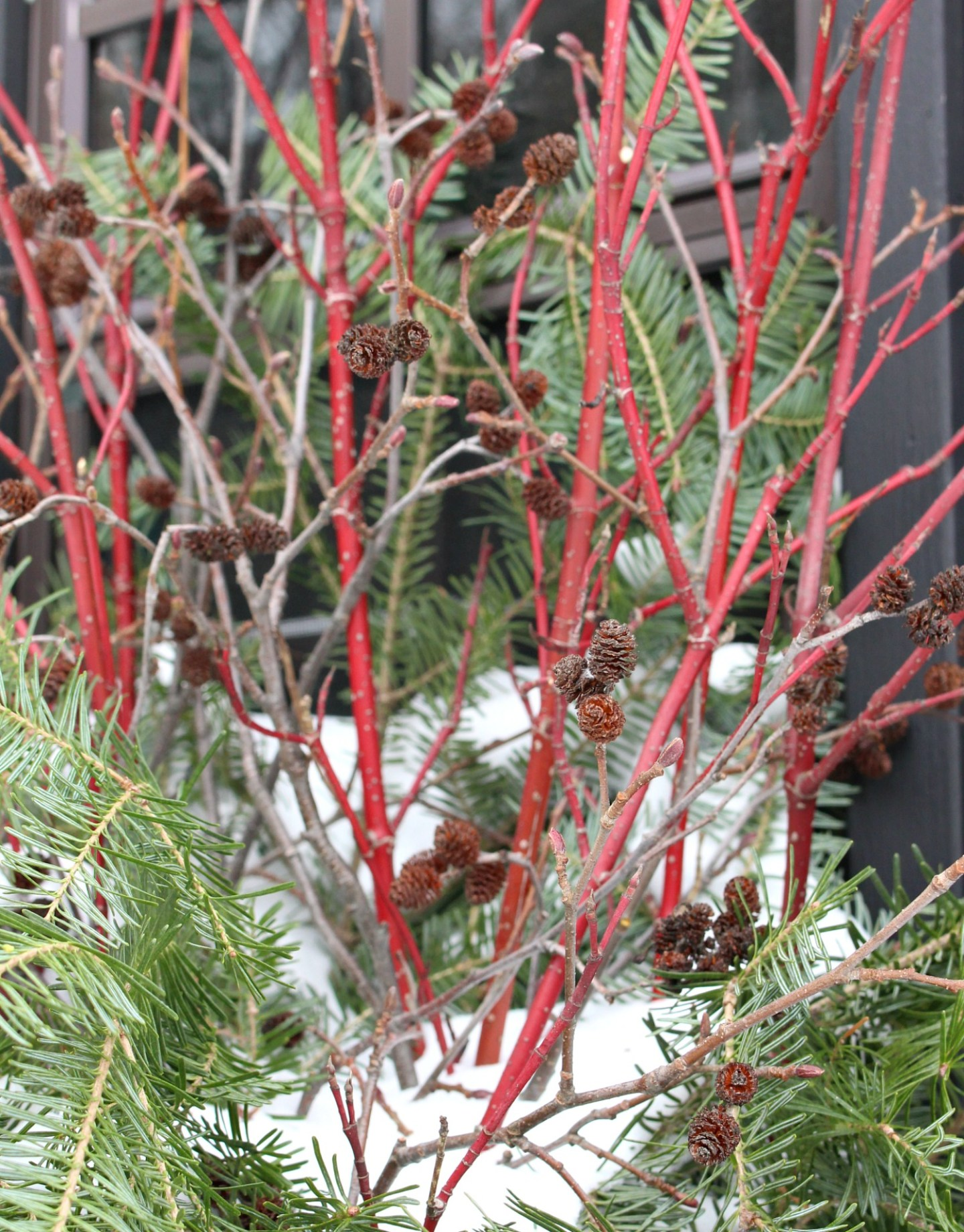 Dogwood and Evergreen Winter Window Box Decor