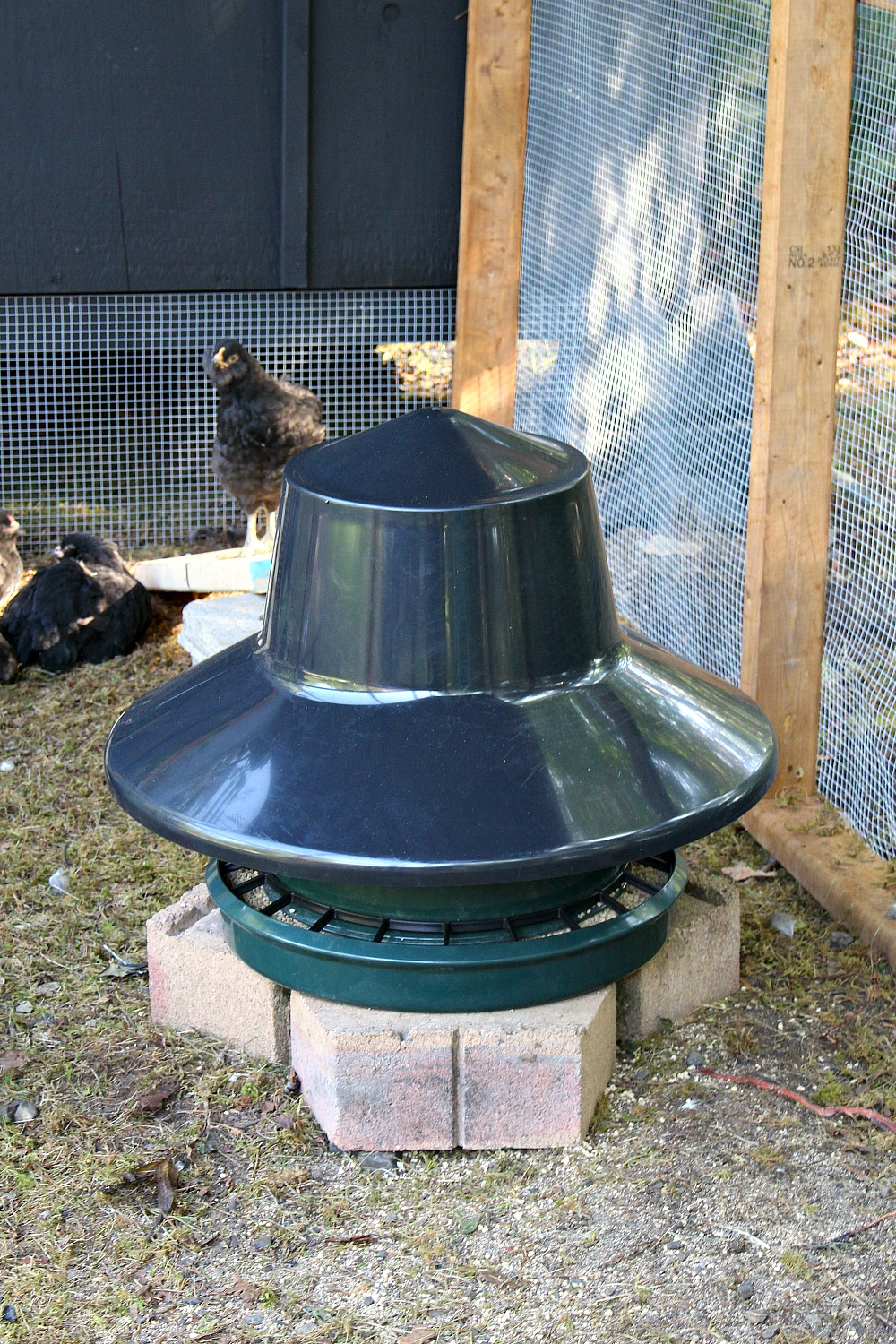 How to Keep Chicken Food Dry