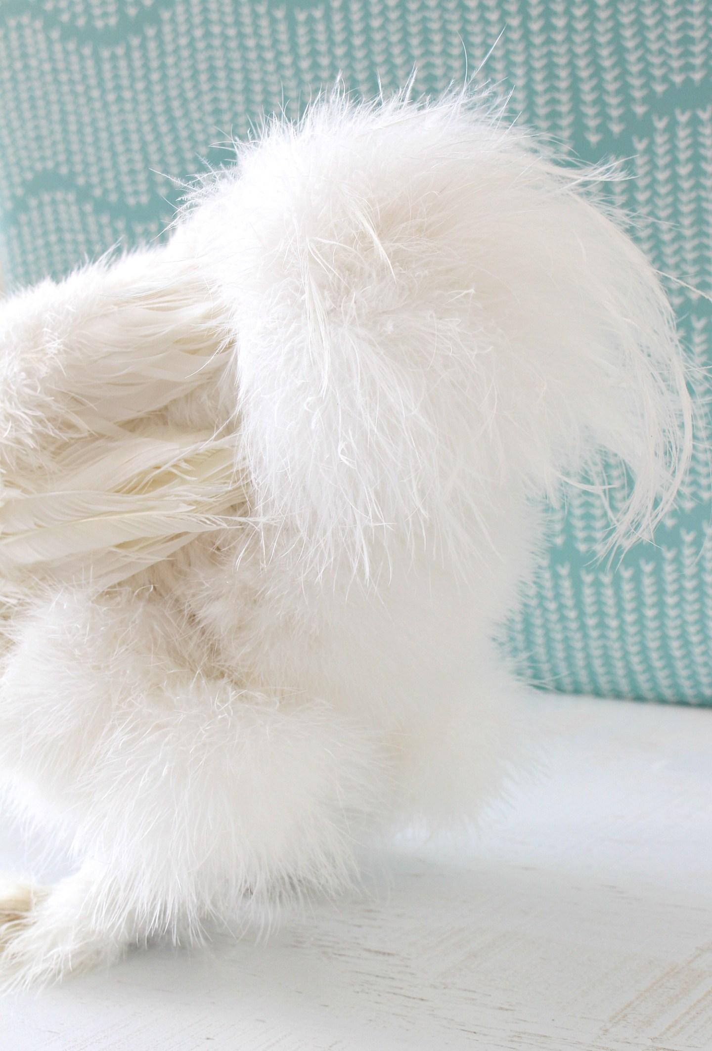Fluffy Chicken Bum